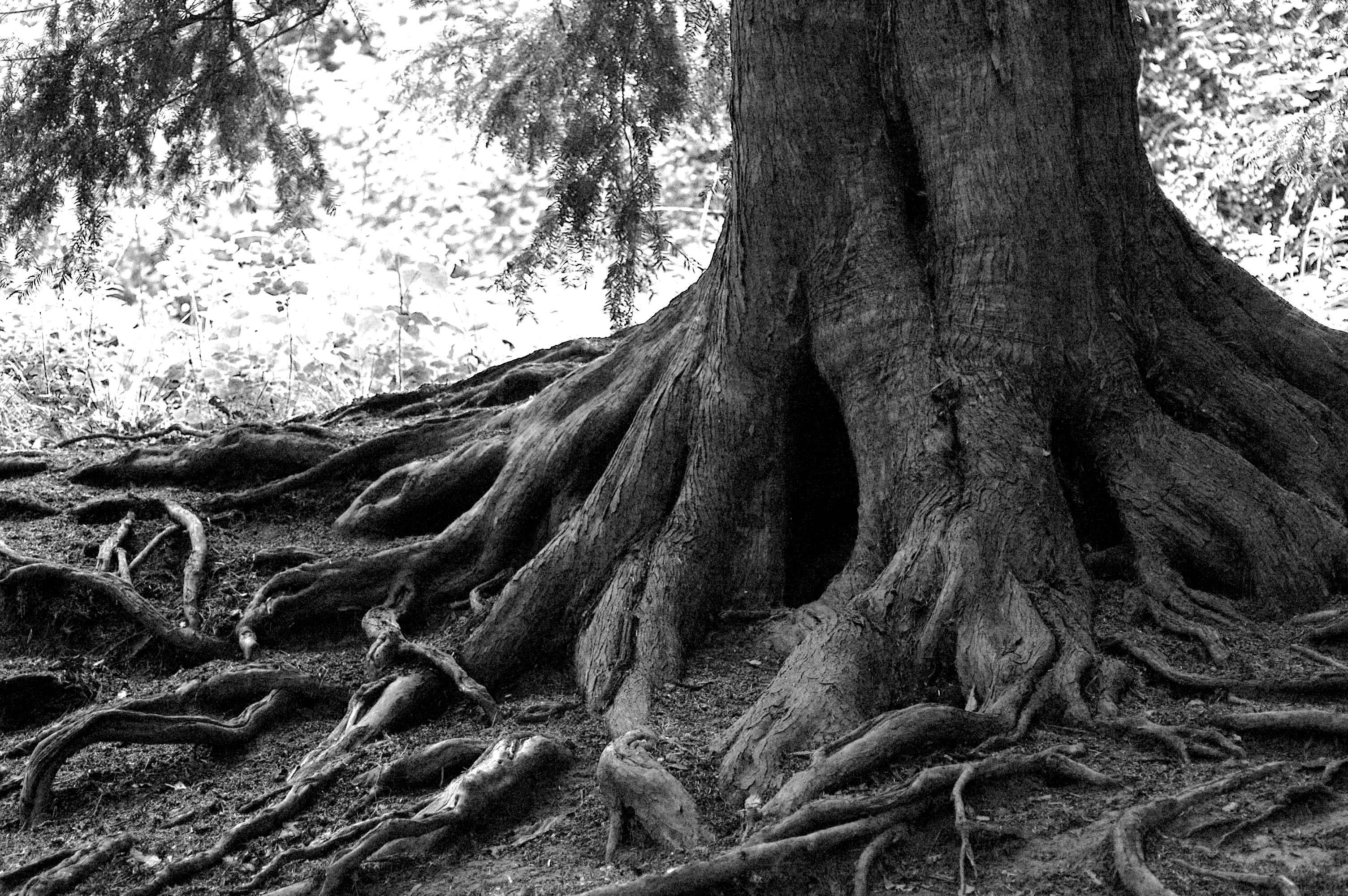 I Often Say A Tree Is Twice As Big Underground As Above