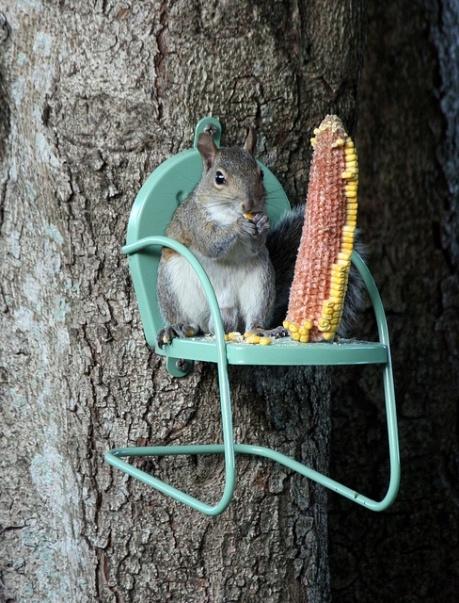 squirrelchair
