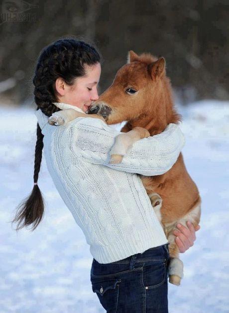 tinyhorse